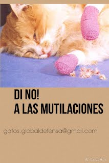 https://sites.google.com/site/globaldefensaanimalessinhogar/globaldedensaASH/denunciar-maltrato-animal
