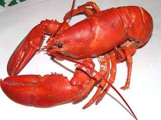 Our lobster is cooked.
