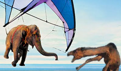 Boeing the Flying Camel attacks Wingless the First-Ever Flying Elephant