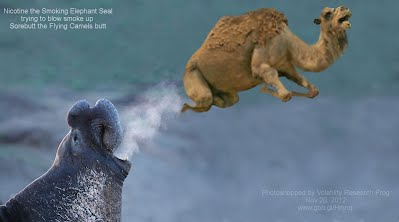 Nicotine the Smoking Elephant Seal trying to blow smoke up  Sorebutt the Flying Camels butt  Photoshopped by Volatility Research Frog Nov 20, 2012 www.goo.gl/Hmnqi