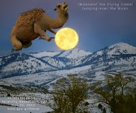 iMoonalot the Flying Camel Jumping over the Moon