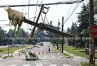 Dec 5, 2012  Flying Sheep Knocks Down Power Lines and Poles