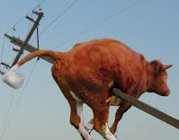 Flying Cow Knocks Down Power Lines and Pole