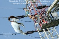 Dec 7, 2012  Stoned Girl Trying To Rescue Flying Ram Sheep Crashed Into Power Lines Being Rescued