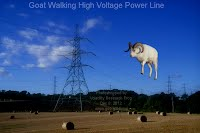 Dec 8, 2012  Goat Walking High Voltage Power Line