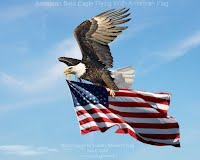 Dec 9, 2012  American Bald Eagle Flying With American Flag