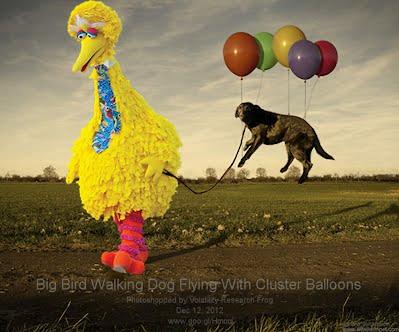 Big Bird Walking Dog Flying With Cluster Balloons