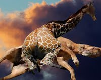 Sad Accident Flying Giraffe and Flying Horse Collide In Flight
