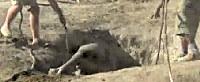 Tear jerker rescue of baby elephant stuck in hole video