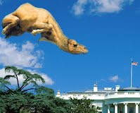 Mit the Flying Camel  trying to land at the White House but the flag and a few other things got in his way
