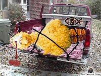 Big Bird dead in truck