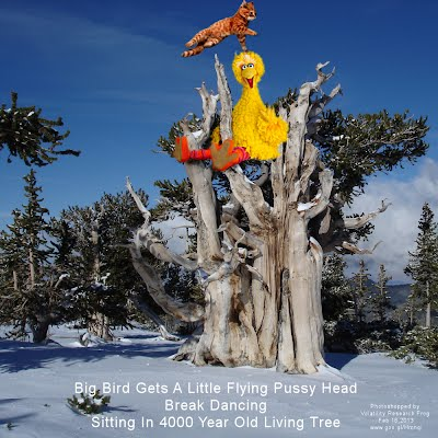 Big Bird Gets A Little Flying Pussy Head Break Dancing Sitting In 4000 Year Old Living Tree (Volatility Research) 1000h