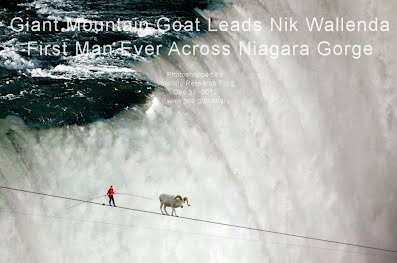 Giant Mountain Goat Leads Nik Wallenda First Man Ever Across Niagara Gorge (Volatility Research) 1000w