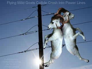 Flying Wild Goats Collide Crash Into Power Lines