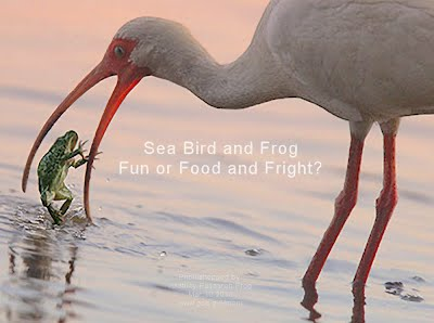 Sea Bird and Frog Fun or Food and Fright (Volatility Research) 1000w