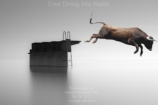 Cow Diving Into Water