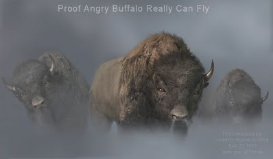 Proof Angry Buffalo Really Can Fly (Volatility Research) 1000w