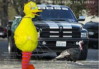 Big Bird Walking His Turkey (Volatility Research) 1000w