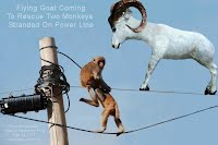Flying Goat Coming To Rescue Two Monkeys Stranded On Power Line (Volatility Research) 1000w