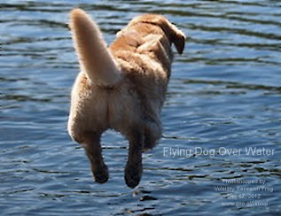 Flying Dog Over Water