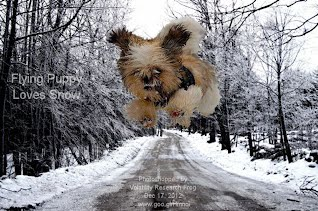 Flying Puppy Loves Snow