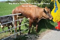 So God Made a Farmer — Big Birds Favorite Cow Hung On Fence — Never Say OW (Volatility Research) 1000w