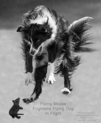 Flying Mouse Frightens Flying Dog In Flight (Volatility Research) 1000w