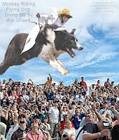 Monkey Riding Flying Dog Doing Fly By For Crowd (Volatility Research) 1000h