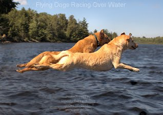 Flying Dogs Racing Over Water