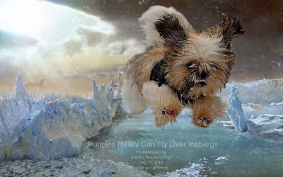 Puppies Really Can Fly Over Icebergs
