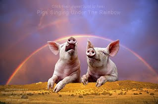 Click their sweet spot to hear Pigs Singing Under The Rainbow (Volatility Research) 1000w