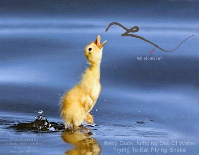 Baby Duck Jumping Out Of Water Trying To Eat Flying Snake (Volatility Research) 1000w