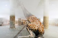 Flying Giraffe Putting On Air Brakes To Not Crash Into Inside Cloud (Volatility Research)