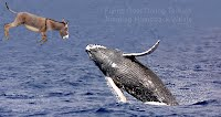Flying Goat Diving To Kiss Jumping Humpback Whale (Volatility Research) 1000w