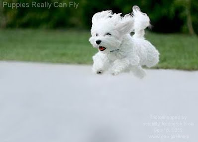 Puppies Really Can Fly