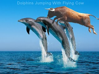 Dolphins Jumping With Flying Cow (Volatility Research)