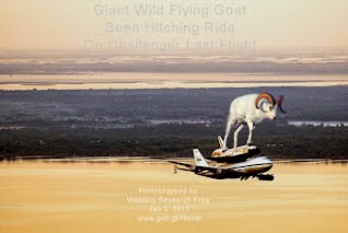 Giant Wild Flying Goat Seen Hitching Ride On Challenger Last Flight (Volatility Research) 1000w