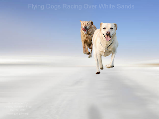 Flying Dogs Racing Over White Sands (Volatility Research) Flying Dogs Racing Over White Sands (Volatility Research)