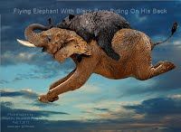 Flying Elephant With Black Bear Riding On His Back (Volatility Research) 1000w