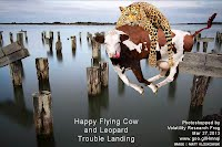 Happy Flying Cow and Leopard Trouble Landing (Volatility Research) 1000w