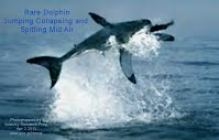 Rare Dolphin Jumping Collapsing and Spitting Mid Air (Volatility Research) 1000w