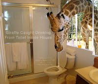 Giraffe Caught Drinking From Toilet Inside House (Volatility Research) 1000w