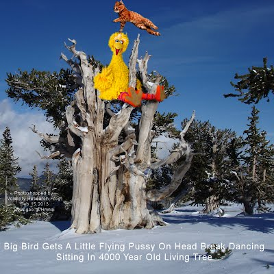 Big Bird Gets A Little Flying Pussy On Head Break Dancing Sitting In 4000 Year Old Living Tree (Volatility Research) 1000w