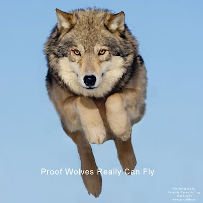 Proof Wolves Really Can Fly (Volatility Research) 1000w