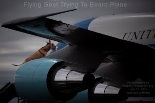 Flying Goat Trying To Board Plane (Volatility Research) 1000w2.jpg