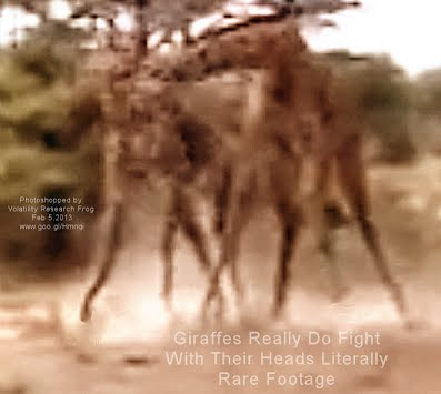 Giraffes Really Do Fight With Their Heads Literally Rare Footage (Volatility Research) 1000w
