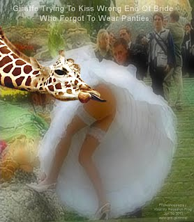 Giraffe Trying To Kiss Wrong End Of Bride Who Forgot To Wear Panties (Volatility Research) 1000w