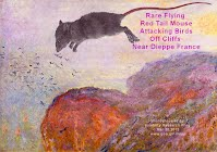 Only photo ever of Rare Flying Red Tail Mouse Attacking Birds Off Cliffs Near Dieppe France (Volatility Research) 1000w