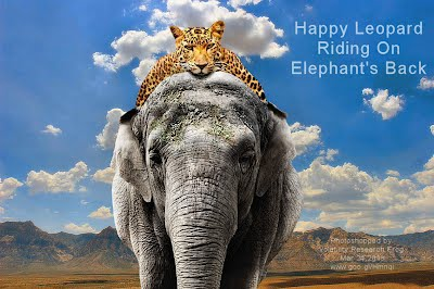 Happy Leopard Riding On Elephant's Back (Volatility Research) 1000w