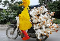 Big Bird Riding 49 Geese To Slaughter (Volatility Research) 1000w